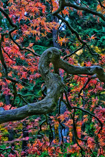 A7204383 01 Photography Art | reflectedpixel