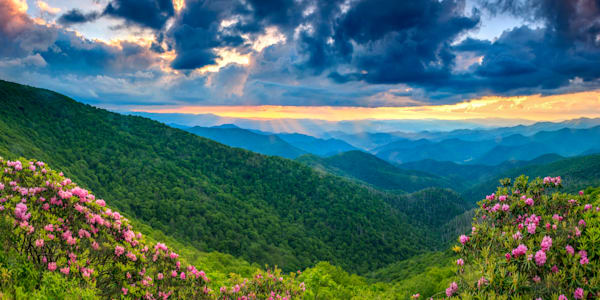 Rays And Rhodys At Craggy Art | Red Rock Photography