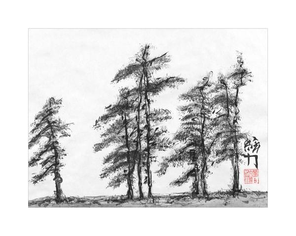 sumi-e, pinetree, three, black, ink