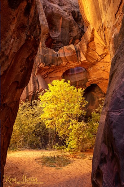 Fall Trees at Golden Cathedral Photograph 2678   Canyon Photographs   Escalante Photography   Utah Photos   Koral Martin Fine Art Photography