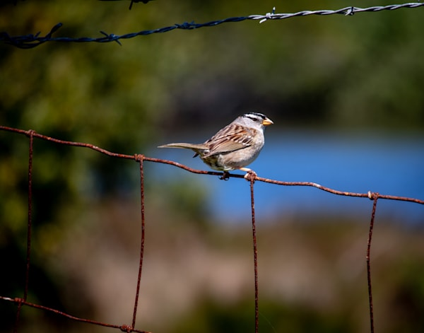 Bird On A Wire Fence Photography Art | Catherine Balck Photography