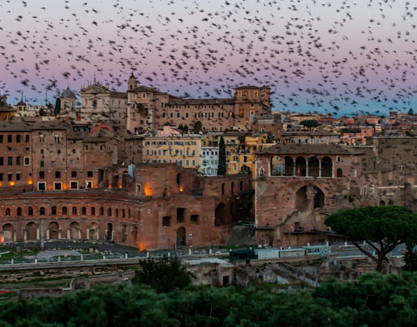 Murmuration Of The Starlings In The Roman Forum Photography Art | Catherine Balck Photography