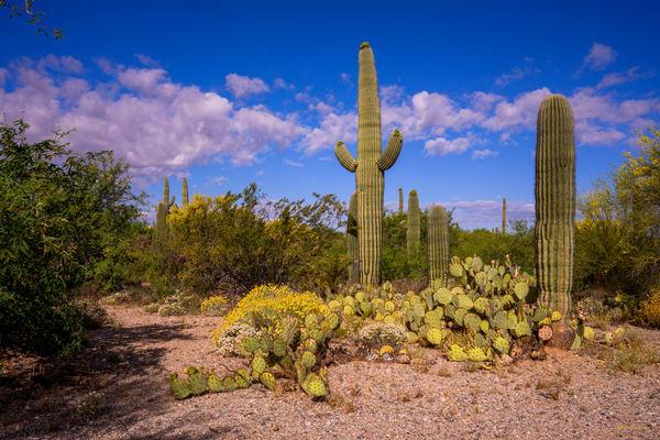 DP628Spring in Saguaro N.P. East