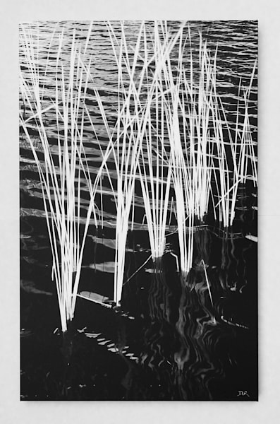 """Ripples in the Reeds"" - Gallery Wrapped Panel"