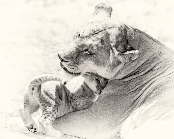 A Mother's Love, B&W Photography Art | Carol Brooks Parker Fine Art Photography