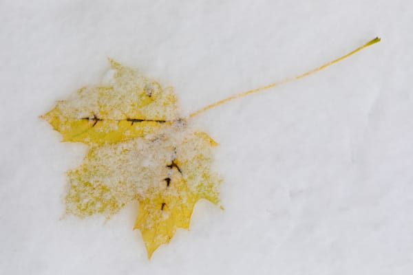 Changing Seasons; snow on autumn - shop fine art prints | Closer Views