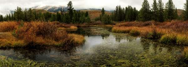 Beaver Pond 1 Photography Art   Mallory Winters Photography