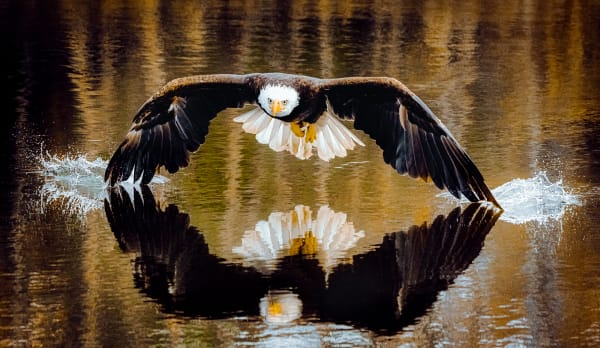 Touch Down Photography Art | Trevor Pottelberg Photography