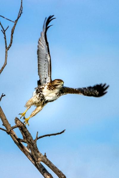 In Flight Photography Art | Trevor Pottelberg Photography