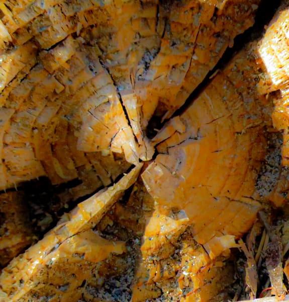 Tree Down 1,  Glacier Point, Yosemite National Park, CA