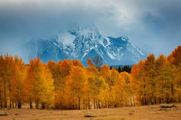 Aspens and Mount Moran