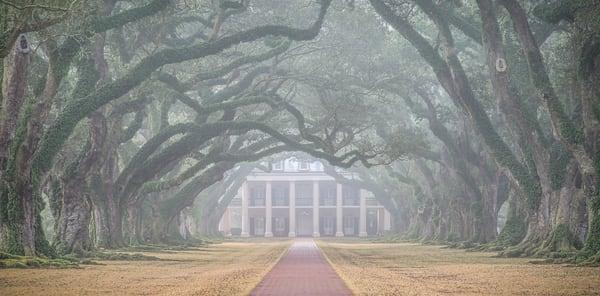 Foggy Oak Alley - Louisiana photography prints
