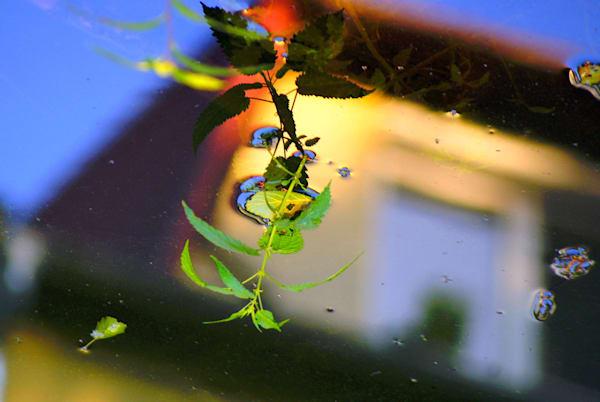 Dangling nature