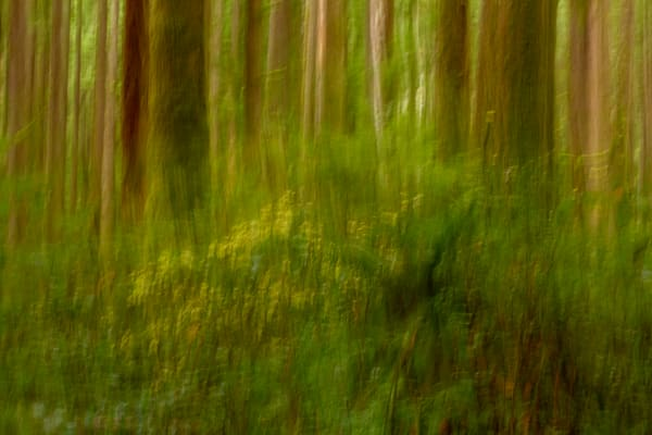 Eden Grove No 2 | Terrill Bodner Photographic Art