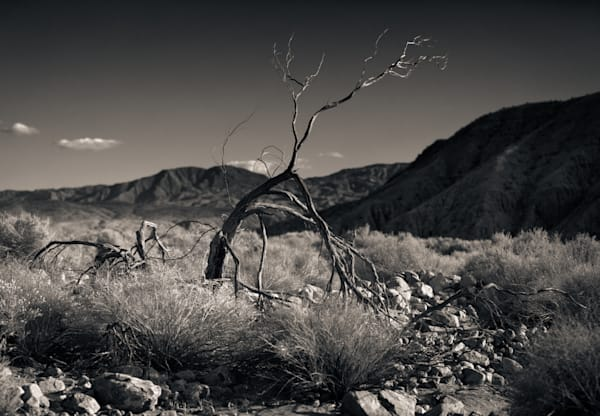 Dry Creek Bed Palm Springs Photography Art | Dan Katz, Inc.
