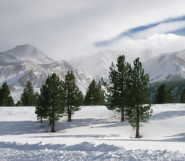 Four Trees Eastern Sierras Photography Art | Dan Katz, Inc.