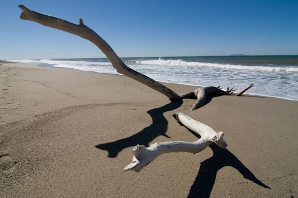 Driftwood and surf
