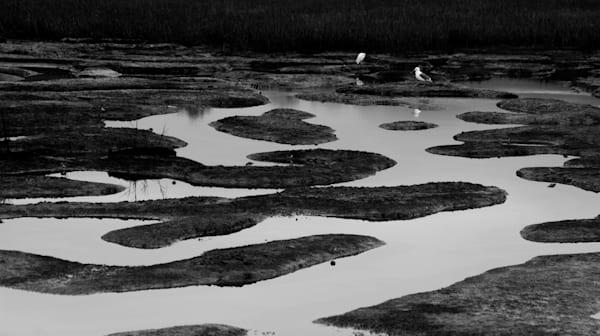 Marsh and birds