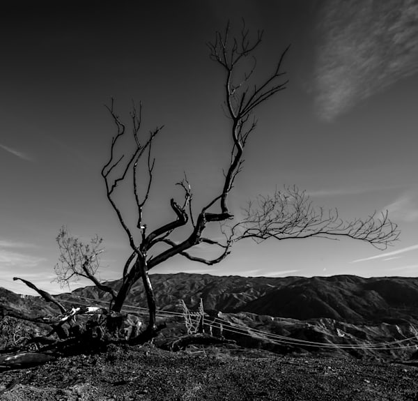 Remains Of A Tree After The Fire Big Tujunga 2018 Photography Art | Dan Katz, Inc.