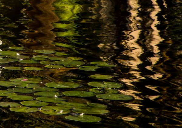 Water Lilies In The Afternoon Photography Art | Dan Katz, Inc.
