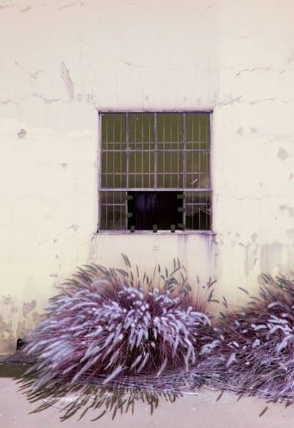 Window And Weeds Photography Art | Dan Katz, Inc.