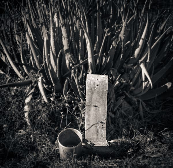 Grave Marker And Cactus Maui 2018 Photography Art | Dan Katz, Inc.