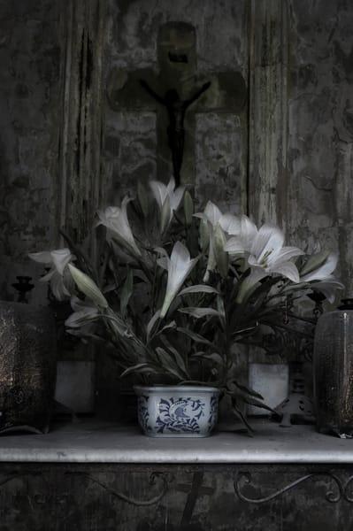 Lillies In Blue Willow Photography Art | Dan Katz, Inc.