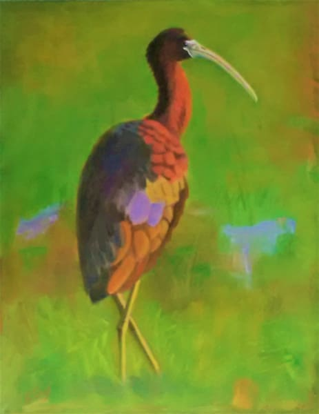 Glossy Ibis Art | Sharon Guy