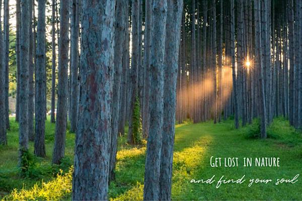Get Lost In Nature Art | Brandon Hirt Photo