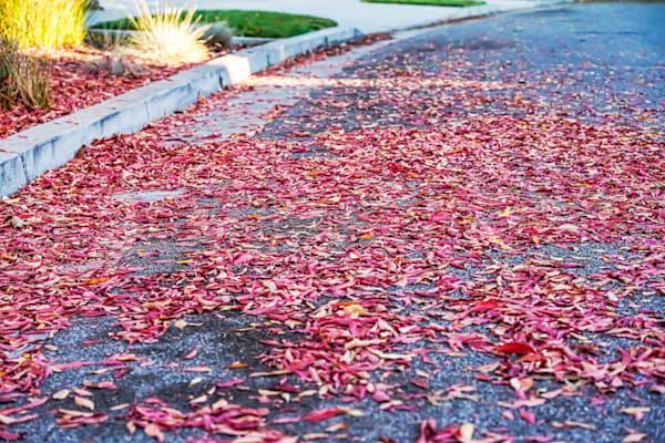 Suburban California Fall