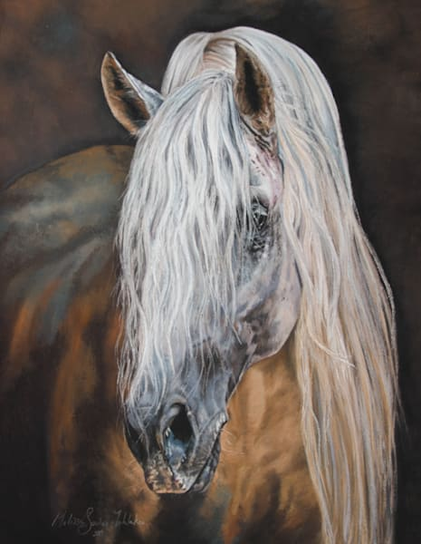 Merlin the Andalusian horse - Fine Art Print