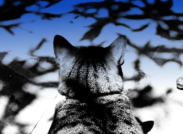 Kimba The Kat Photography Art | Rosanne Nitti Fine Arts