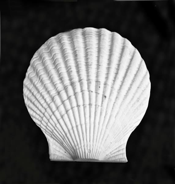 Shell Photography Art | Rosanne Nitti Fine Arts