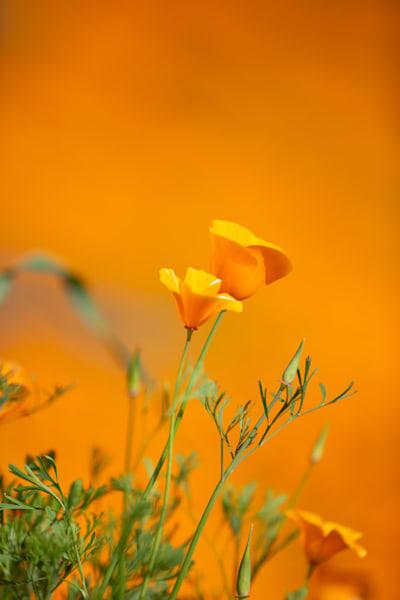 Orange Sky  Photography Art | Rosanne Nitti Fine Arts