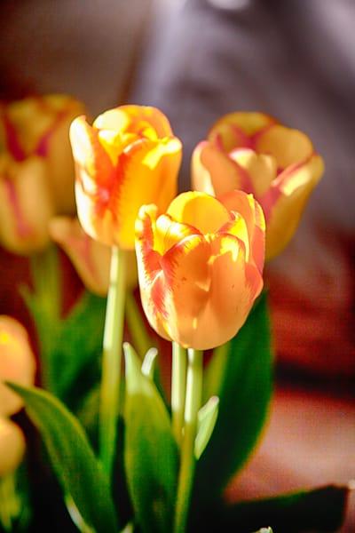 Tulips Photography Art | Rosanne Nitti Fine Arts