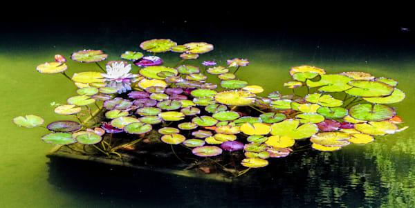 Lillies In Japenese Garden Photography Art   Rosanne Nitti Fine Arts
