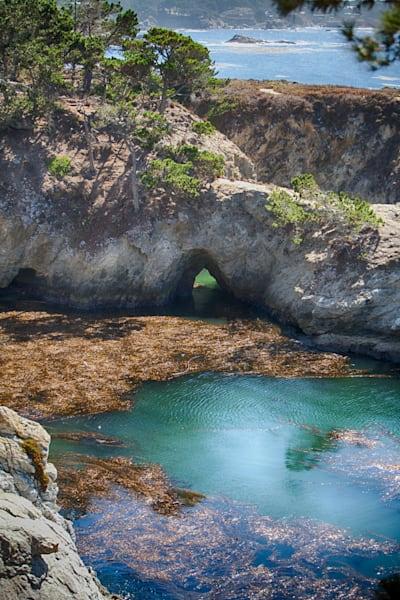 Point Lobos 3 Photography Art | Rosanne Nitti Fine Arts