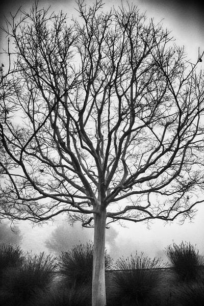 Getty Tree #1 Photography Art | Rosanne Nitti Fine Arts