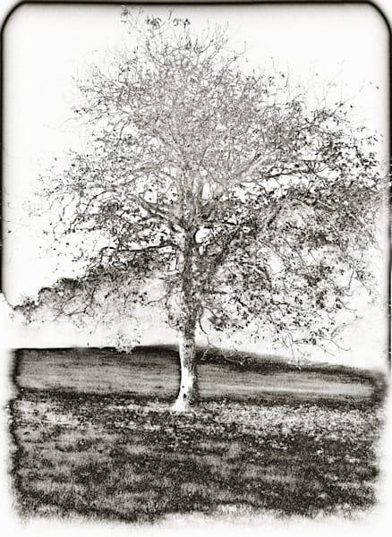 Firenze Tree Photography Art | Rosanne Nitti Fine Arts
