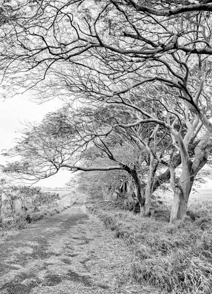 Puunene Maui 1 Photography Art | Rosanne Nitti Fine Arts