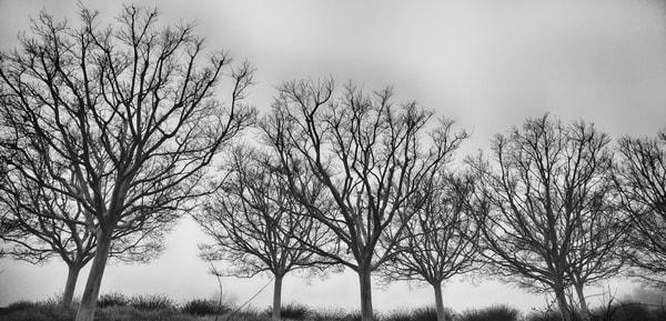Getty Tree #2 Photography Art | Rosanne Nitti Fine Arts