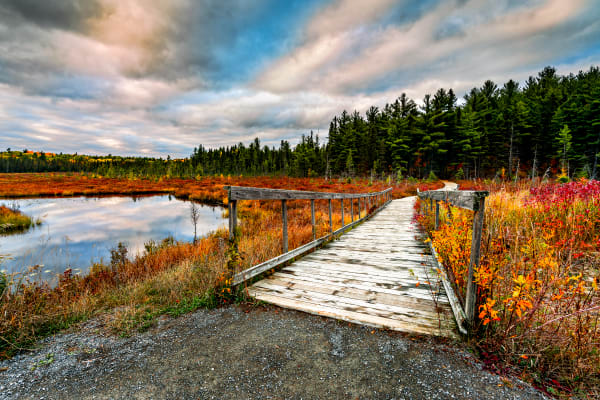 Algonquin Delight Photography Art | Trevor Pottelberg Photography
