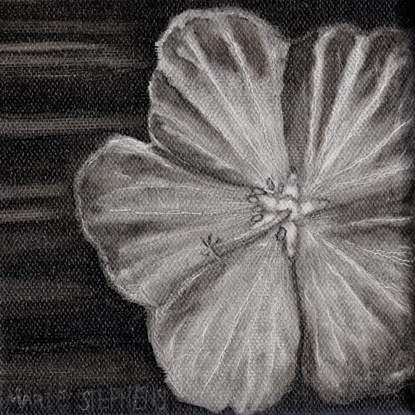 Geranium Sanguinium 5x5 Oil Copyright Marie Stephens 2019 Art   Marie Stephens Art