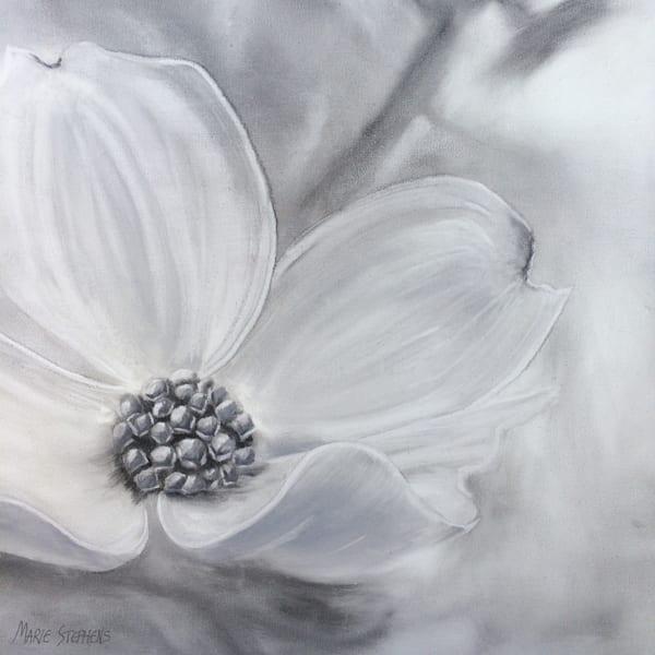 Dogwood Flower Art by Marie Stephens Art