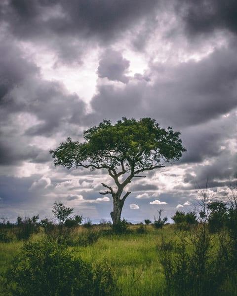 south africa, kruger national park, safari