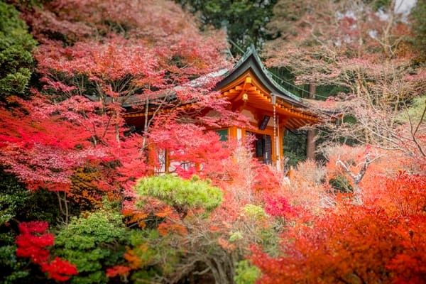 Fine art photograph of a Japanese Shrine hidden in a sea of red leaves by Ivy Ho