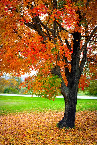 Falling Leaves - No.4