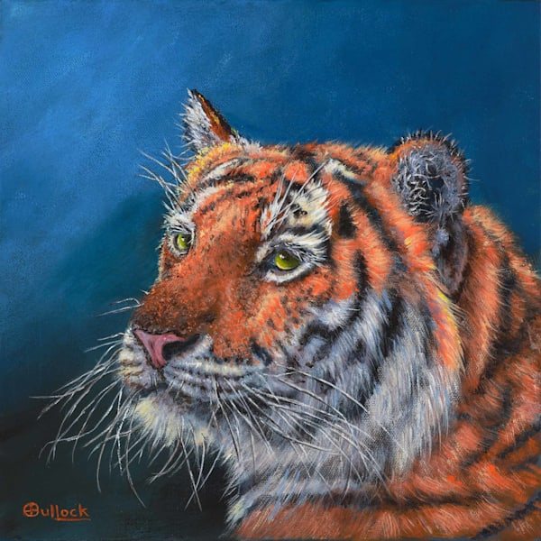 Amur Tiger on Blue