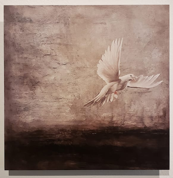 Ashen Dove Artist Proof Metal Print