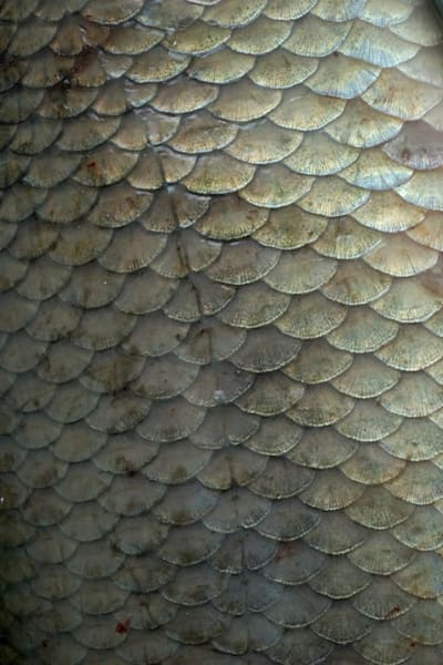 Fish Scales Art | Wet Paint NYC